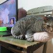 猫と鰹節の日