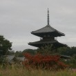 曇天下の三重塔
