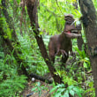 恐竜パークのサンダンカ*ハシカンボク*アンスリウム