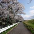 多摩川サイクリングロードは満開の桜だらけ