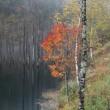 霧の自然湖
