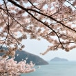 春色。。。オフィシャルサイト更新しました☆