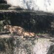 動物園へ、行ってきました
