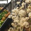 一足早く晩秋の花と枯れ美を愛でる