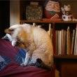 居酒屋の猫