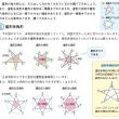 星形多角形