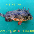 笑転爺の釣行記 9月9日☀ 久里浜海岸