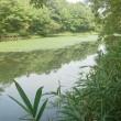 野池で釣行
