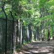 初夏の道野辺を歩くーボタニカルウォーク(Botanical Walk)