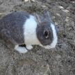 毒ガス兵器とウサギの島