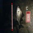 【荒川シーバス2017】チーバス釣り師