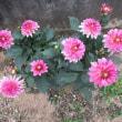 そっと咲く夏の花