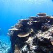 透明度が復活!!サンゴを堪能してきましたー!!