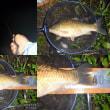 釣行記7月17日~18日 前夜の口惜しさも少しは、晴れた気がします。