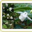 庭の花 記念写真・集合写真
