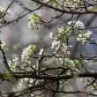 新緑の季節。「生命の誕生」が緑色であることの意味