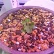 食虫植物について 食虫植物38