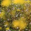 赤城自然園 初秋のお花畑