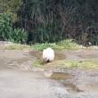 猫と雨水‼