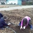 薩摩芋掘り@茨城県 森ファーム