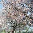 春の日に のほほ〜んと( ̄∀ ̄)