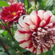 枝切とダリヤの花