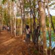 北海道旅行17(2日目・美瑛 青い池)