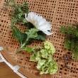 植物に見る4つのエレメント&3つのプロセス