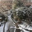 雪です☃️