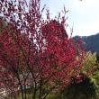 本日、春の景色