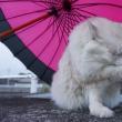 雨・・・雨が降ってるにゃ