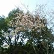 ~春の訪れ~