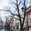春の日差しの東京・自由が丘ですが、桜のつぼみは小さく、まだまだ硬そうです