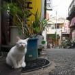 街角の白猫