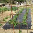 野菜畑の準備