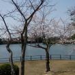 桜~2018~