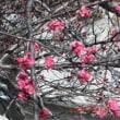 春を探して、その2・散歩編