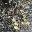 春が来ました~~~。