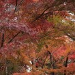秋色に会いに行く久安寺