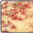 紅葉の撮影