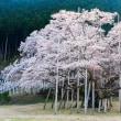 淡墨桜 Ⅱ