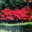 紅葉狩り 緑化センター