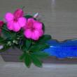 琉球大田焼窯元作品紹介☆自作の花器に花を活ける(*^_^*)