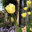 春の花ざかり