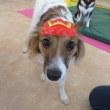 【パピーパーティー(2/10 午前の部)】定員となりました。 犬のしつけ教室@アロハドギー
