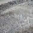 金剛山系にも積雪