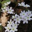 今パンセの庭で咲いている花