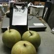 数ある 日本梨の品種の 中で 最高水準の 梨 甘太(かんた)君 未だ お店では 買えません