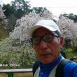 ☆ 神原の 枝垂れ桜
