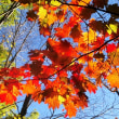 花彩々  晩秋の景色
